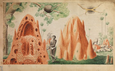 Illustrations by H. Smeathman, for 'Some Account of the Termites',1781