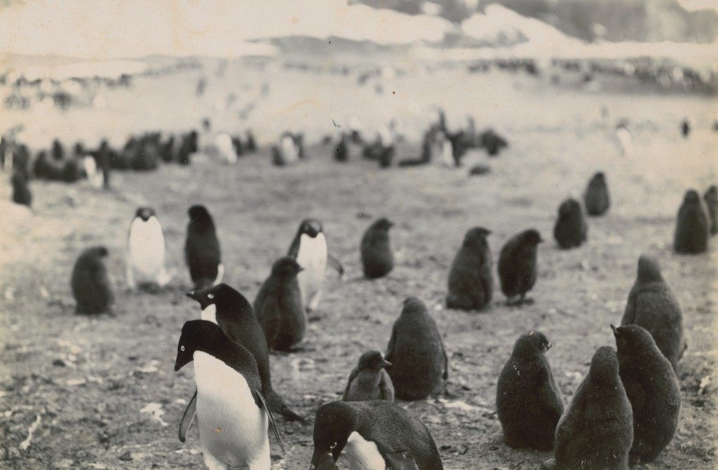 The British National Antarctic Expedition