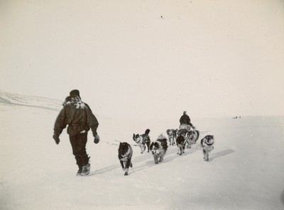 Dogs sledge returning