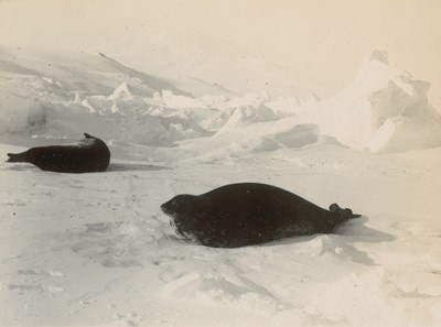 Views of seals in different positions (2)