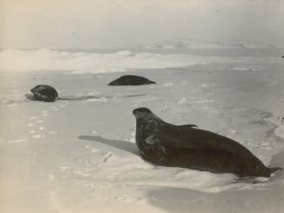 Views of seals in different positions (3)