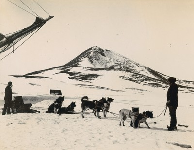 Dog sledge team. Observation Hill.
