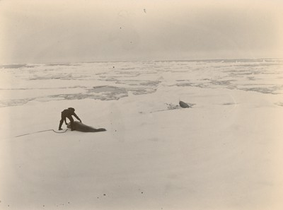 Securing seals in ice pack (2)