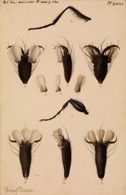 Bluebottle fly and Fever-fly legs
